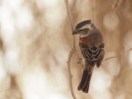 example of selective focus (bokeh) - bird with blurred background (http://www.flickr.com/photos/gusjer/4122091181/)