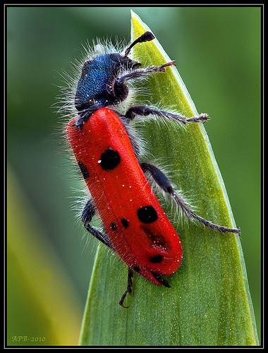 macro photograph of a red bug - credit to: http://www.flickr.com/photos/37291407@N04/4655496874/