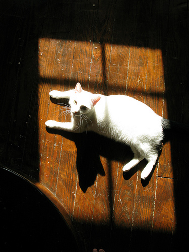 cat sunning on wood floor, photo credit: http://www.flickr.com/photos/geoffeg/